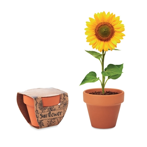 Immagine di MO6147 SUNFLOWER - Semi di girasole